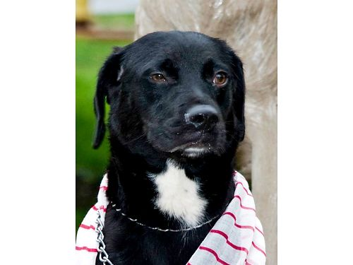 BLACK FRIDAY SPECIALS Every Friday All black cats  dogs will be half off the normal adoption fee