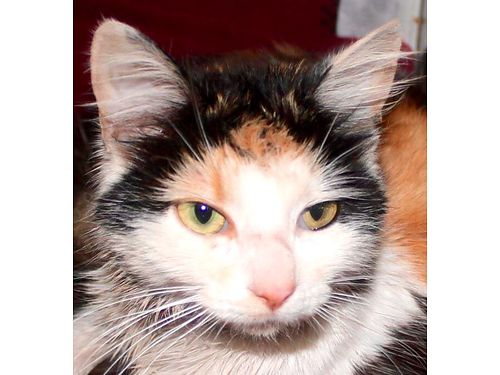 COME ON BY And see a selection of AVAILABLE CATS from the Oak Ridge Animal Shelter Every Friday