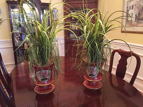 URNS, (2) CURRENTLY WITH PLANTS, $80 EACH ...