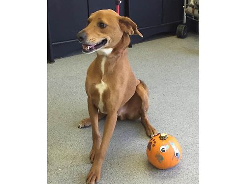 GORDOS A QUIET LITTLE DOG well mannered easy to walk loves to go on rides wyou Hes a 1yr old