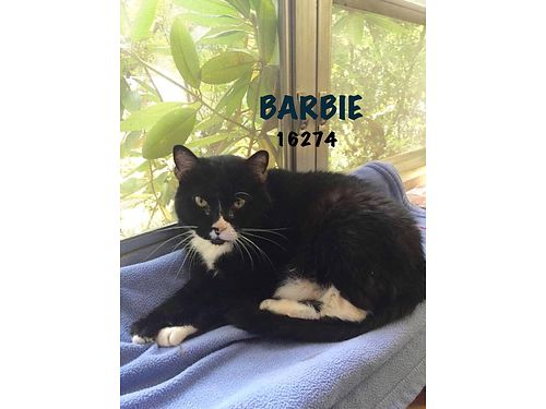 BARBIE is a sweet older lady who is dreaming of her own White Christmas home Her 110 adoption fee
