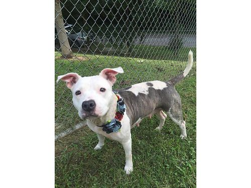 MEET LAMB CHOP This SWEET Girl is Good wMost Other Dogs  Children proper meet  greets a MUST
