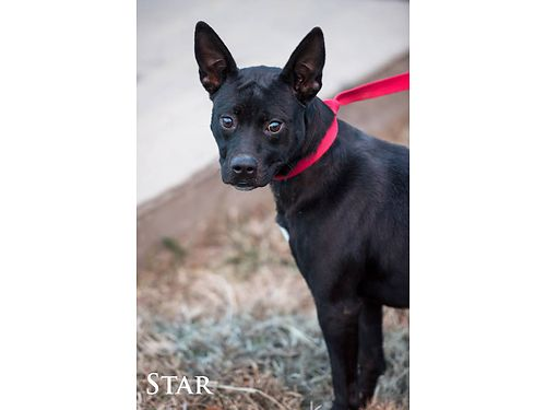 STARS AN ADORABLE SWEET 1yr old terrier mix Shes named for the unusual marking on her chest Sh