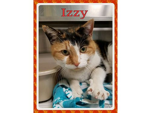 IZZYS A BEAUTIFUL CALICO who is sad to be at the shelter She is very affectionate  just looking f