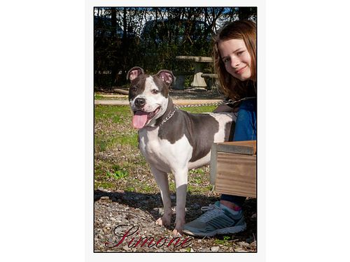 PRECIOUS SIMONE needs a precious someONE to take to her forever home She is friendly little pit mix