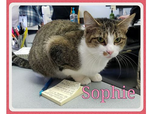 SOPHIES A YOUNG girl that needs life outside of a cage Shes a lap cat seeking an indoor home  pe
