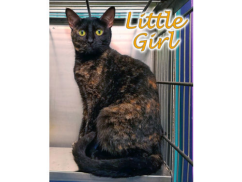 LITTLE GIRLS A BEAUTIFUL polydactyl Shes a timid kitty who needs a patient owner who will help he