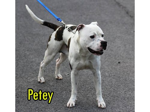 PETEY isnt my real name sure wish these people could read my mind Found me roaming around in Oak