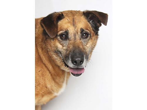 MISSYS READY TO PLAY Despite being 7yrs old this Shepherd mix is still full of energy Still love