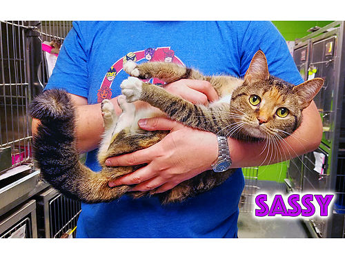 SASSYS A SWEET CURIOUS GAL that loves to explore her place This friendly girl is seeking an indoo