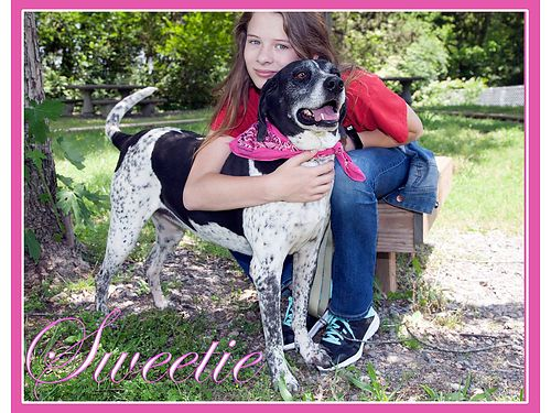 SWEETIE IS A LOVELY 5-6yr old hound mix that is already house trained  knows basic commands Adopti
