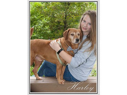 HARLEYS A FUNNY LITTLE HOUND MIX that came in wsweet shy Jane He is very sweet  easy to handle