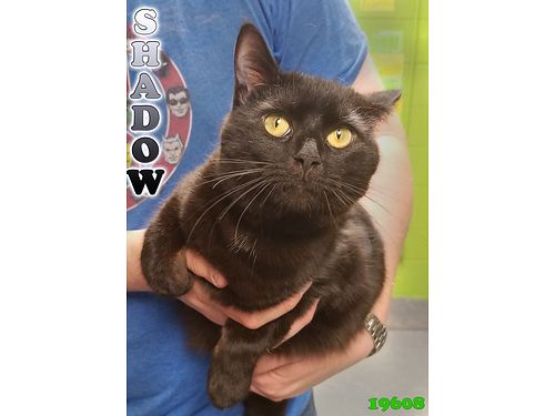 MEET SHADOW He is a 1yr old feline with an inquisitive nature He is ready to come explore your hom