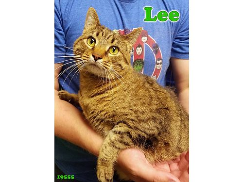LEE IS A 4YR OLD FEMALE who is a bit on the plus side She has lots of love to give and there is lot
