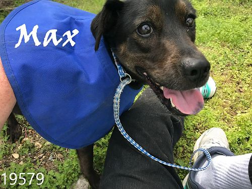 MAX IS A 2YR OLD HOUND MIX about 30 pounds He would be a great family dog Adoption fee 55 includ