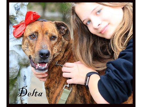DELTA DAWN is a gorgeous young brindled mix She doesnt care for other dogs but loves people Adopt