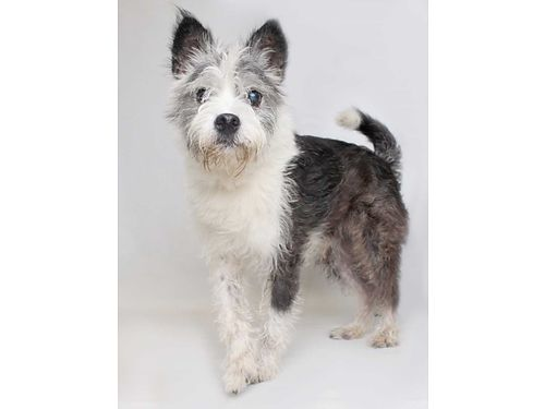 KIT KAT HERE Older set in my ways but STILL Awesome Sweetest demeanor loves playing wother dog