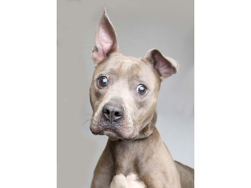 URBAN COWBOYS A TRUE BALL OF ENERGY whod bring joy to any home Hes 6 ready to go home today He