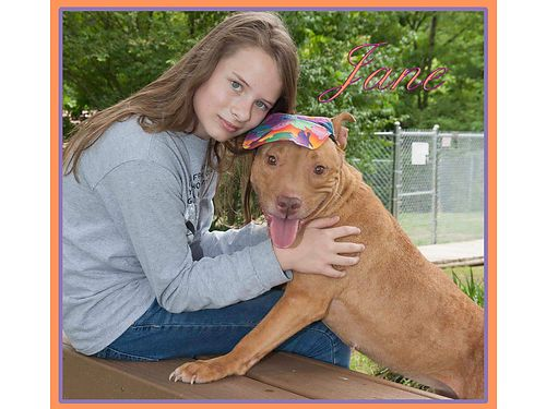 JANES A VERY PROTECTIVE GIRL that would benefit from a male owner or indoor home with a fenced yard