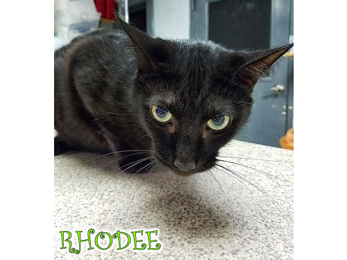 RHODEES A 2YR OLD JOY of a boy wan affectionate personality Hes looking for a very stable indoor