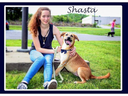 SHASTA IS A SWEET FRIENDLY shepherd mix girl She is playful but does love to dig Adoption fee 5