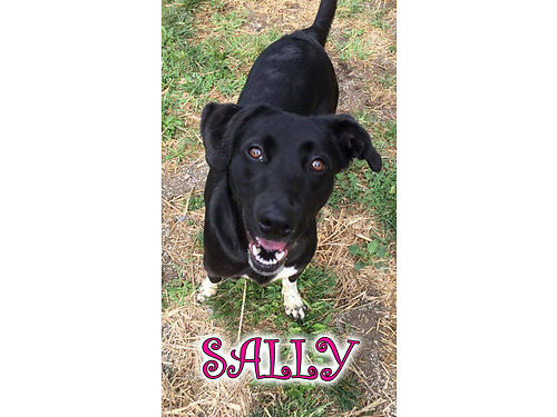 SALLY is a a labsetter mix with the sweetest disposition looking for a warm bed to snuggle in Ado