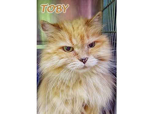 TOBYS A GORGEOUS FRIENDLY 10YR OLD neutered male Toby would love a calm home with a sunny spot on