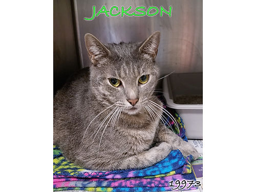 JACKSON IS A SWEET TIMID 2yr old boy looking for a family he can trust Adoption fee 55 includes n
