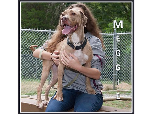 MEGGIE NEEDS AN INDOOR HOME wlots of love  food where she can be the only dog This 2yr old has a