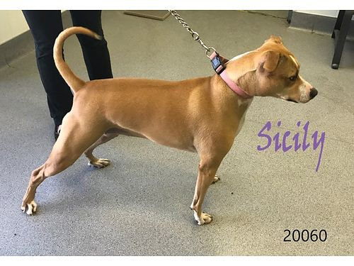 SICILYS ABOUT 3YRS OLD a beautiful girl Found in the Walmart parking lot but didnt get reclaimed