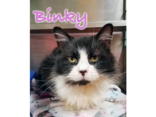 BINKY IS A LOVELY LADY who is roughly 3yrs old Shes had a hard life up til now and needs a very lo