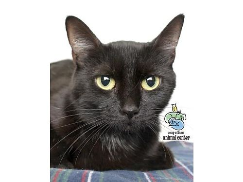 JANA IS A FEMALE CAT who is smart kind witty and so much Shes ready to go home today For info o