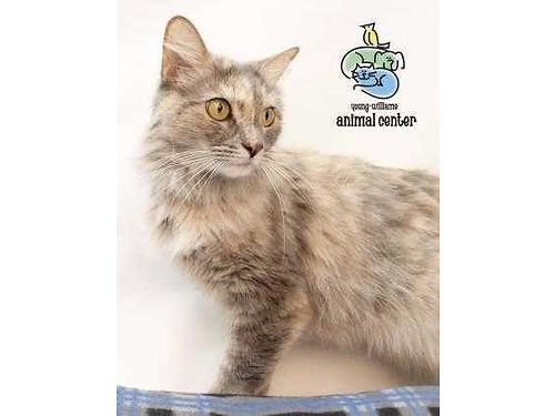ASHLEIGH IS A SUPER MODEL whos 4yrs old and ready to snuggle up in a new home For info on Ashleigh