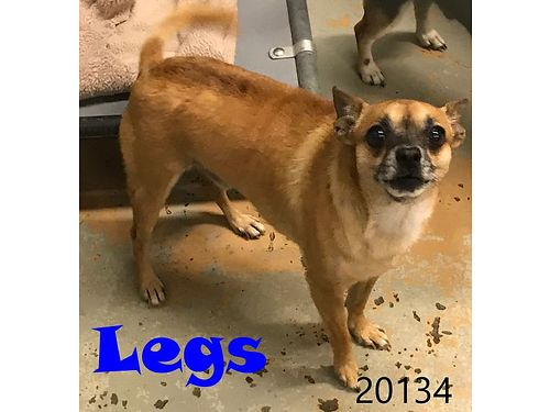 LEGS IS A TINY 3yr old that wants to be spoiled He has siblings that he can go with if you are look