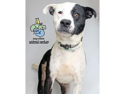 SADIES A 3YR OLD CHARMING DOG whod do well in a home wno other pets or small children She hasnt