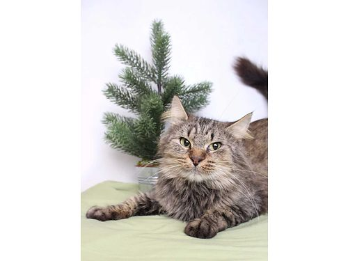 PIXIE IS A FLUFFY gorgeous smart  fun 3yr old cutie pie Shes ready to go home today and gets al