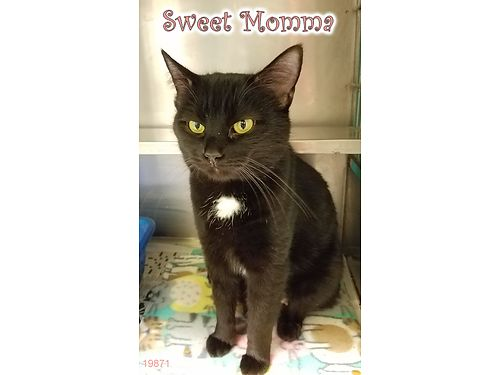 SWEET MOMMAS A SLEEK 2yr old girl with a heart of gold Shes looking for someone to love Adoption