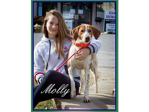 MOLLYS A PRETTY playful Red TickWalker hound mix that needs a new home without male dogs Adoptio