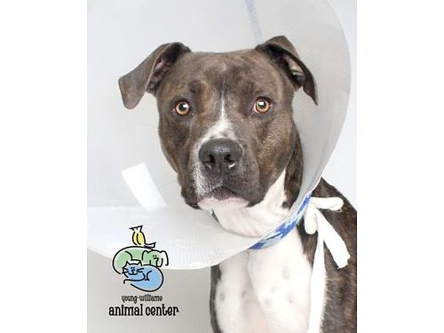 TANKS A 2YR OLD MIXED BREED who does not like cats but enjoys playing wolder children Tanks an a