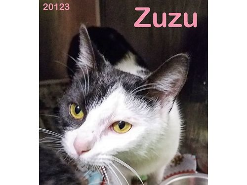 ZUZUS A BEAUTIFUL 1YR OLD FEMALE whos ready to find a loving indoor home where she can run  play
