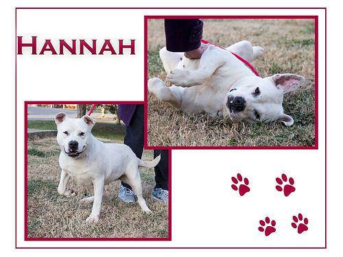HANNAHS A 2-3YR OLD PITBULL MIX Shes bonded wBrick She has a slight vision problem  feels more