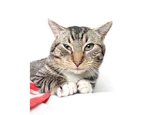 MOJO IS A MALE CAT whos ready to go home TODAY Hes extremely talkative affectionate full of per