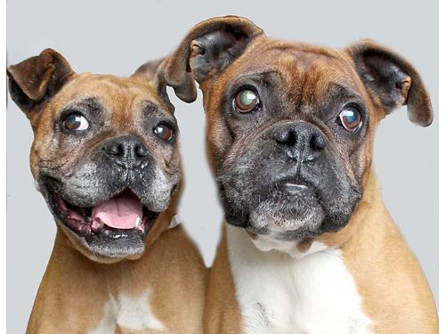 GINGER  HOOCH male  female are best friends who through no fault of their own didnt grow up in