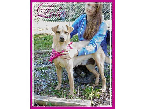 LOLA IS A PLAYFUL 1yr old Lab Mix She can escape fences  needs a home that can give her attention