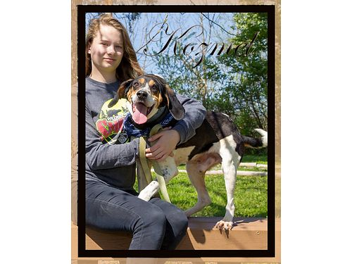 KOZMELS A BIG HOUND BOY wa great big personality He is rip roaring to get out of the shelter and