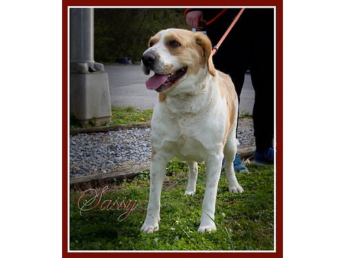 SASSYS A VERY SWEET GIRL House trained obedient loves to sit on your lap or lay on the couch Lo