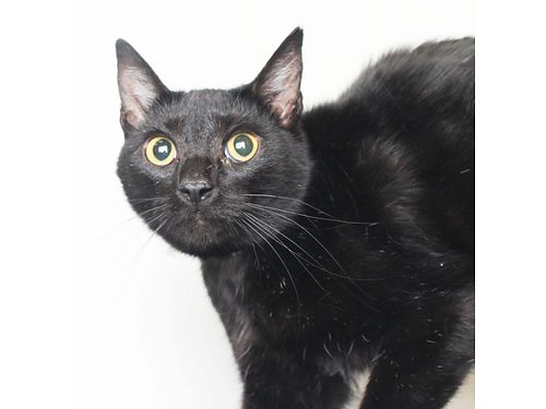 THIS BEAUTY IS LIL MAMA a 3yr old female loves to snuggle She comes across shy but is very sweet
