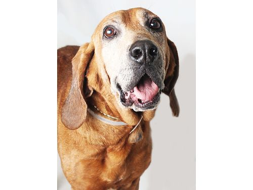 COPPERS A 10YR OLD MALE still loves to play enjoys going outside to stretch his legs often but is
