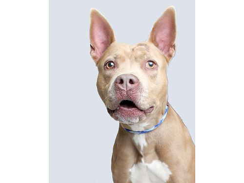 IVYS A 3YR OLD FEMALE Shes is a goofball Loves to play wpeople enjoys cuddling  getting all t