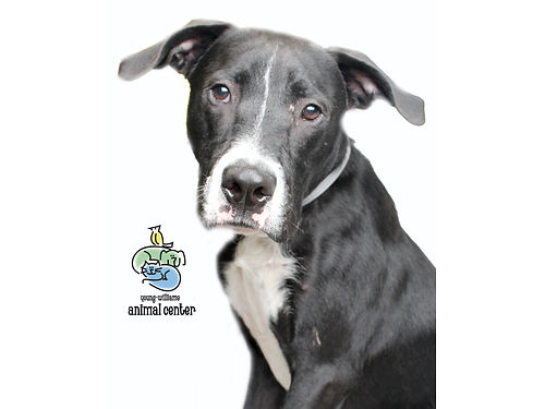 JINNS A 1YR OLD wlots of energy He enjoys treats squeaky toys Hed do well in a home wsomeone